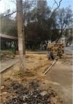 """Millət vəkili Könül Nurullayevanın təşəbbüşü və təşkilatçılığı ilə inşa edilən """"Qızıl Əsgər"""" şəhid bulağı kompleksi istifadəyə verilib (FOTO) - Gallery Thumbnail"""
