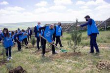 Министерство энергетики провело акцию по посадке деревьев по случаю 98-летия со дня рождения Общенационального лидера Гейдара Алиева (ФОТО) - Gallery Thumbnail
