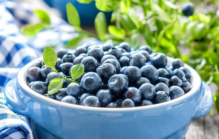Bank of Georgia's support to boost blueberry growing