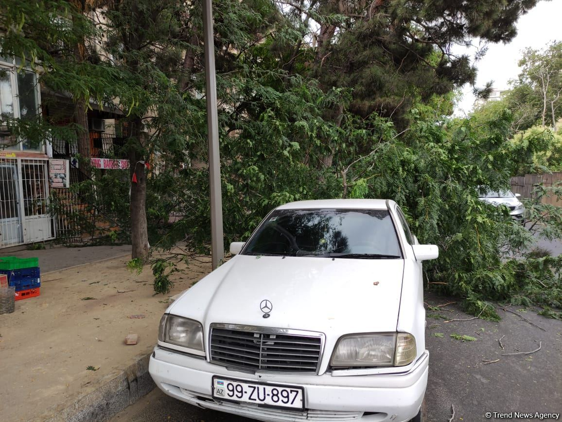 Bakıda ağac avtomobilin üzərinə aşdı (FOTO)