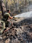 New details of extinguishing forest fires in Turkey by Azerbaijani firefighters disclosed (PHOTO/VIDEO) - Gallery Thumbnail