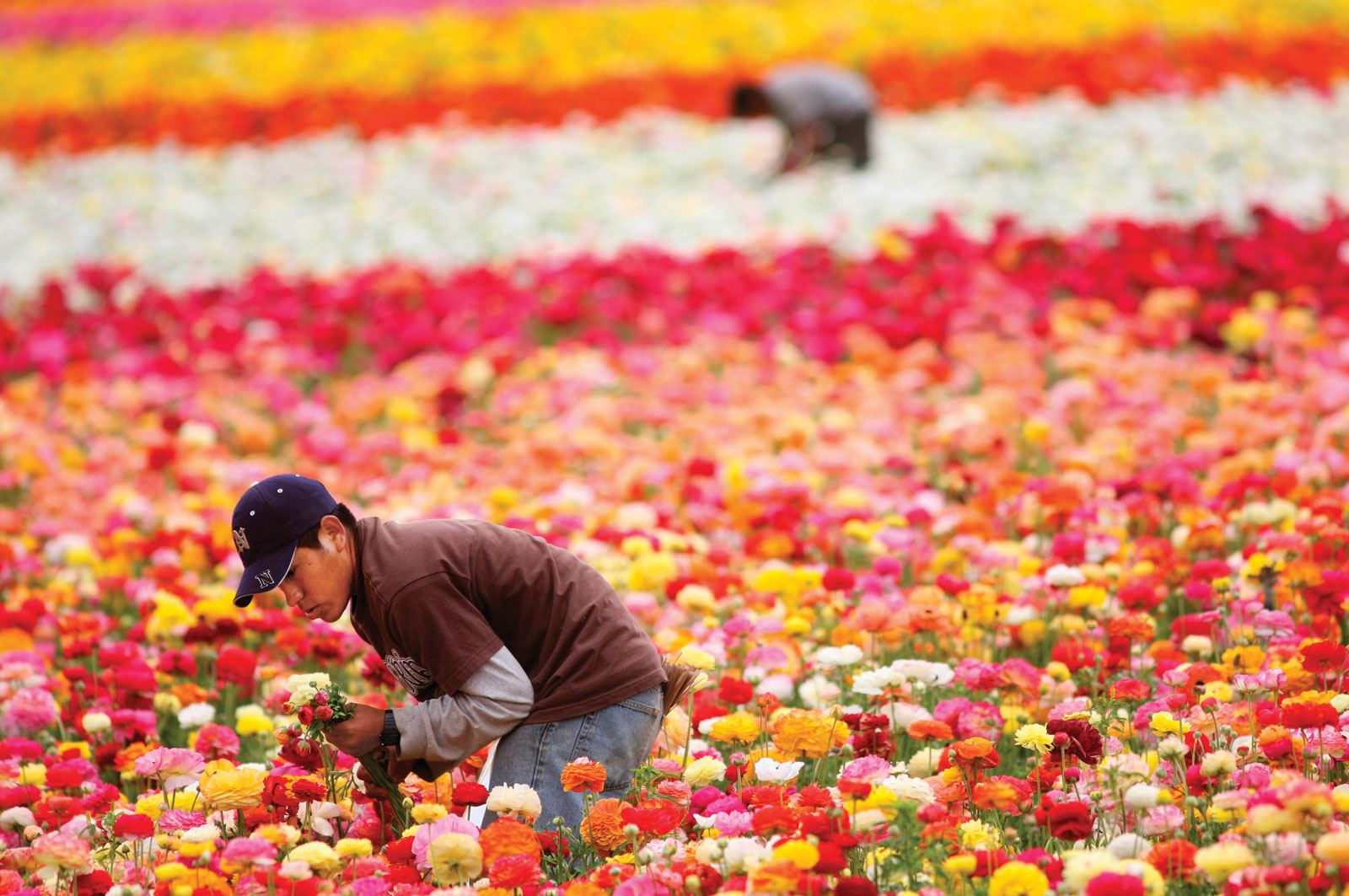 Uzbekistan to allocate funds for developing floriculture