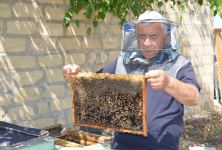 Device for increasing productivity of bee colonies successfully tested in Azerbaijan (PHOTO) - Gallery Thumbnail