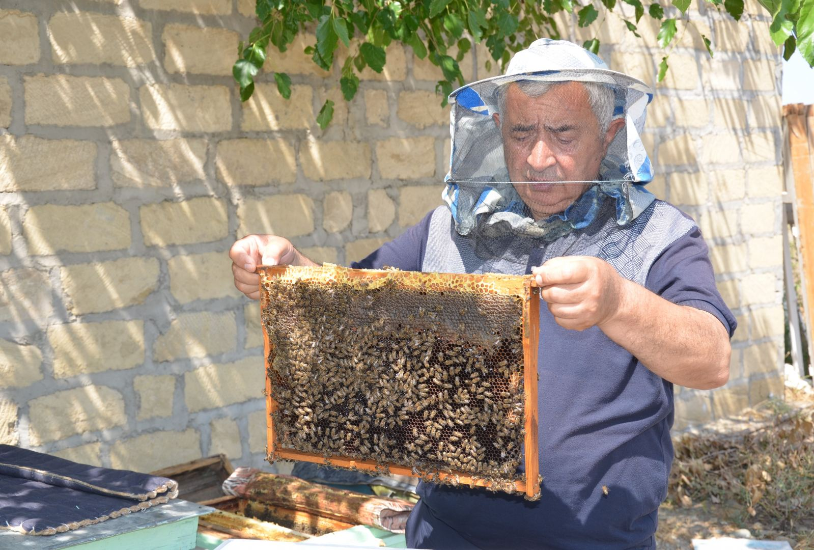 Device for increasing productivity of bee colonies successfully tested in Azerbaijan (PHOTO) - Gallery Image