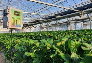 South Korea interested in building 'smart farms' in Turkmenistan