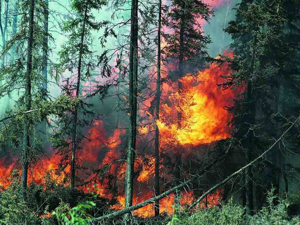 Photo: Joint Russian-Kazakh exercises conducted to respond to forest fires / Kazakhstan
