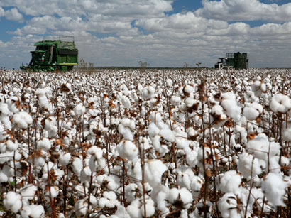Photo: Turkey removes tariffs on Egyptian cotton yarn imports: Trade minister / Arab World