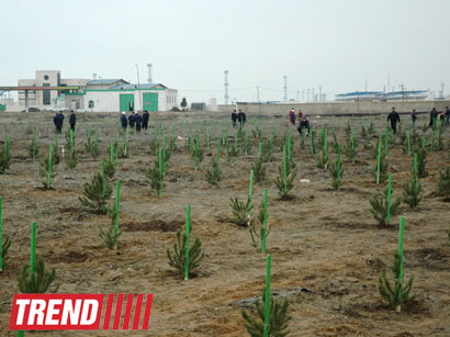 Photo: 100,000 trees to be planted in Azerbaijan by 2020 / Azerbaijan