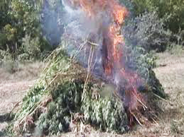 Photo: Some 1.3 tonnes of drugs destroyed in Tashkent 