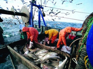Photo: Fish catch less than allocated quota in Azerbaijan  / Society