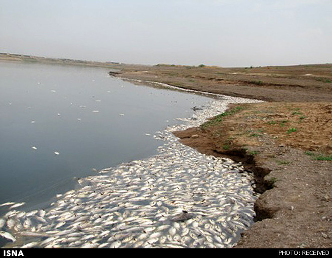 Photo: 2 mln fish found dead in Tehran's Fashafuyeh dam / Iran