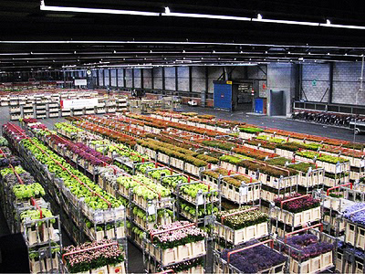 Photo: Iran needs $8 mln to create flowers and plants export terminal / Iran