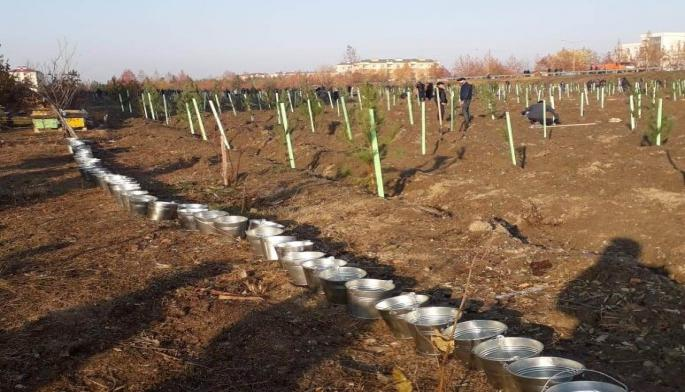 Tree planting campaign starts in Azerbaijan's Shamakhi city (PHOTO)