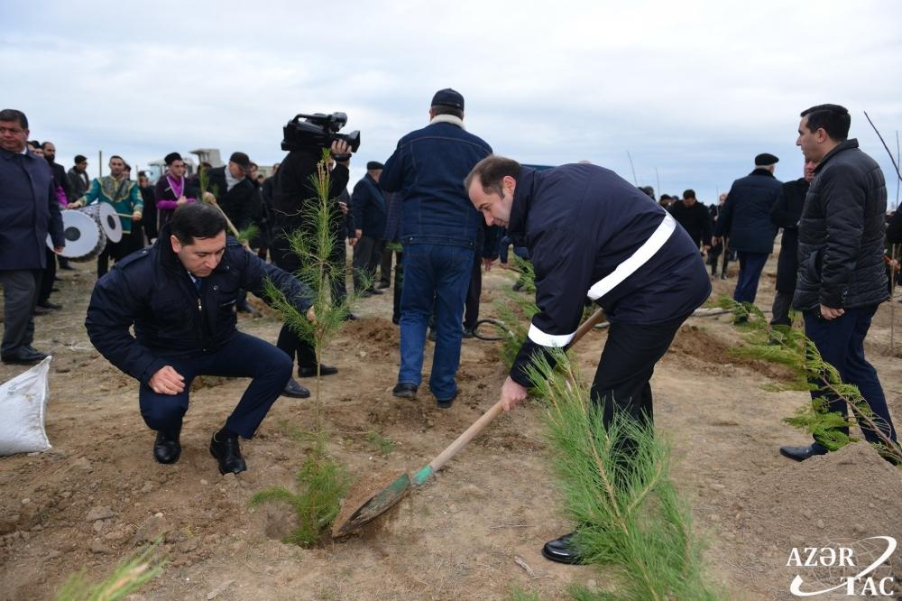 В Сумгайыте продолжается акция по высадке деревьев (ФОТО)