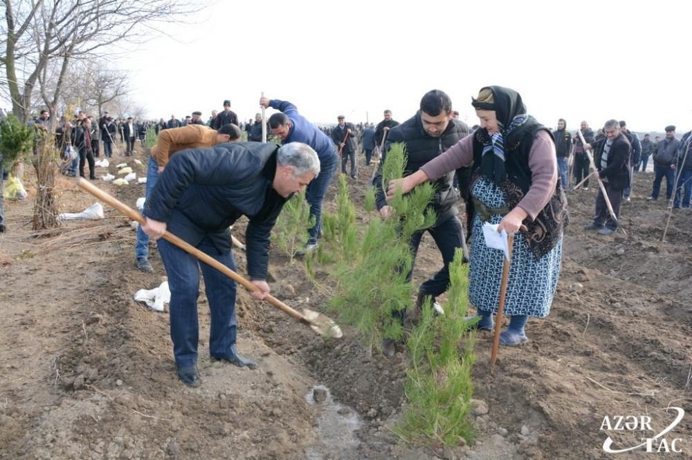 В Тертерском районе прошла акция по высадке деревьев (ФОТО)